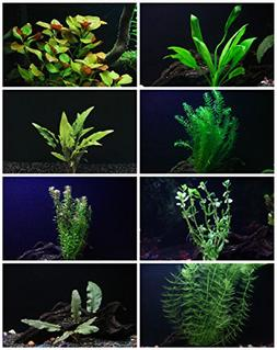Aquarium Plants Discounts 30+ Stems - 8 Species - - Anachari