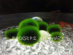 Imported 200pcs/bag Moss Ball Seeds Aquarium Decoration Fish