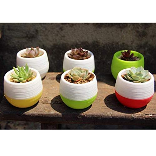 Dig dog bone Mini Round Plastic Office Pots Succulent Plant Flowerpot Water Delivery
