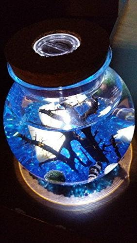 LED - Glass Jar with 2 Aquatic Moss Ball Blue Fan Coral Seashells Desk Decor Table Unique Birthday Presents