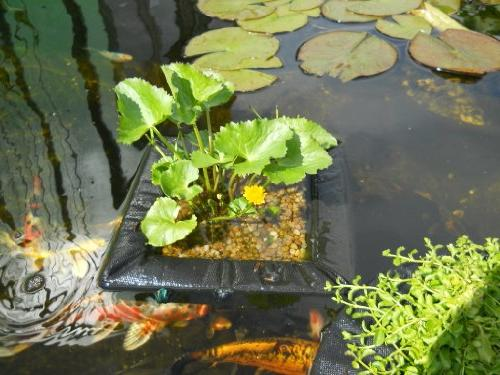 Velda Floating Water Garden Island 35cm inch Square