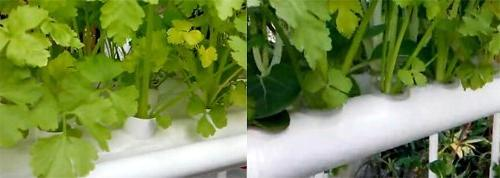 INTBUYING Hydroponic Leafy Vegetables 10 Pipes 3 Plant Sites