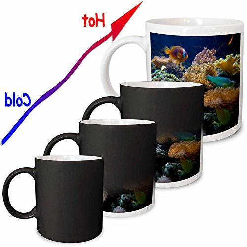 3dRose Salt Aquarium, Oc01 Douglas Magic Transforming Mug, 11-Ounce