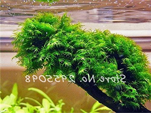 Pearl Moss Ornamental Plants Water For 500 Particles /