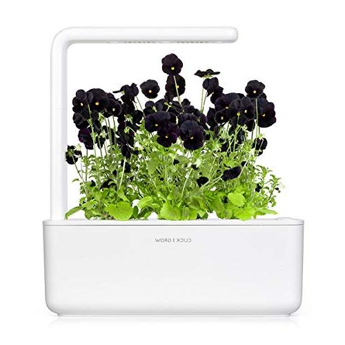 Click Garden Pansy Plant Pods,