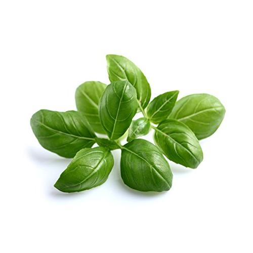 Click and Garden Basil 3-Pack