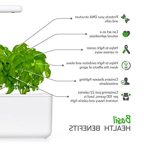 Click and Garden Basil Plant 3-Pack