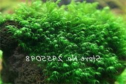 Pearl Moss Seeds Ornamental Plants Water Grass Seeds Live Aq