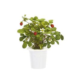 Click & Grow Wild Strawberry Refill 3-Pack for Smart Herb Ga